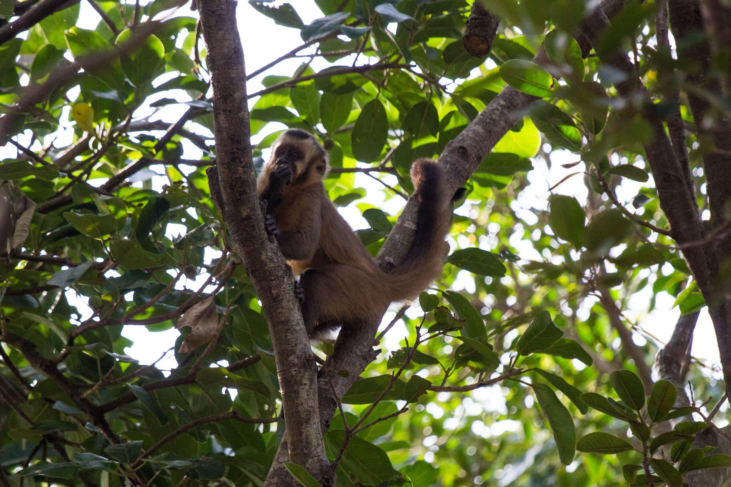 JOPOI 060418 Jardin Botanico 16-min